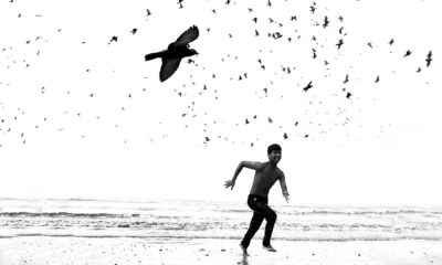 Photo of Boy on Beach with Birds